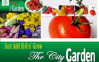 "HortiDaily Reports FibreDust Product Launch of ""The City Garden"""