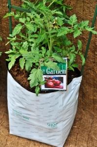 city-garden-grow-bag-with-tomatosm
