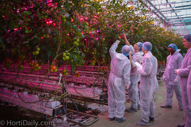 The HortiDaily High Tech Greenhouse Tour – Gorinchem
