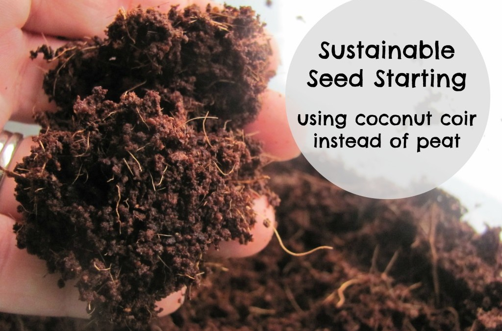 Starting Seeds with Coconut Fiber