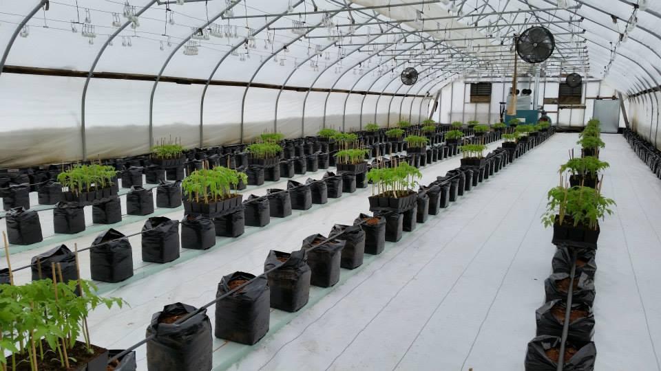 March Farm Ready To Plant